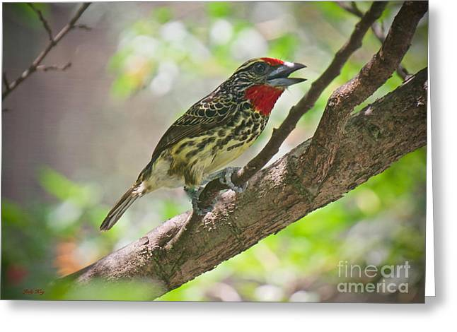 Wild Animals Greeting Cards - Out on a Limb Greeting Card by Judy Kay