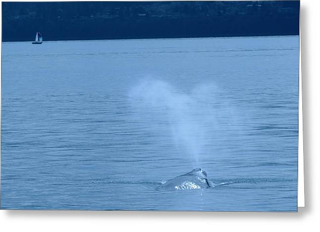 Whale Photographs Greeting Cards - Out The Blow Hole  Greeting Card by Jeff  Swan