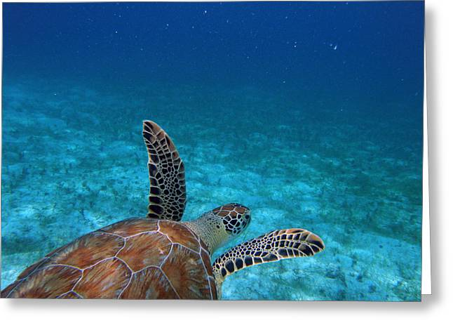Snorkel Greeting Cards - Out To Sea Greeting Card by Kimberly Mohlenhoff