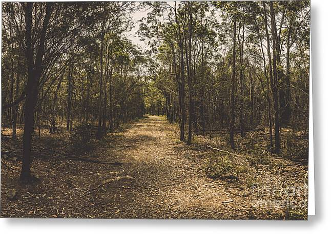 Outback Queensland Bush Walking Track Greeting Card by Jorgo Photography - Wall Art Gallery