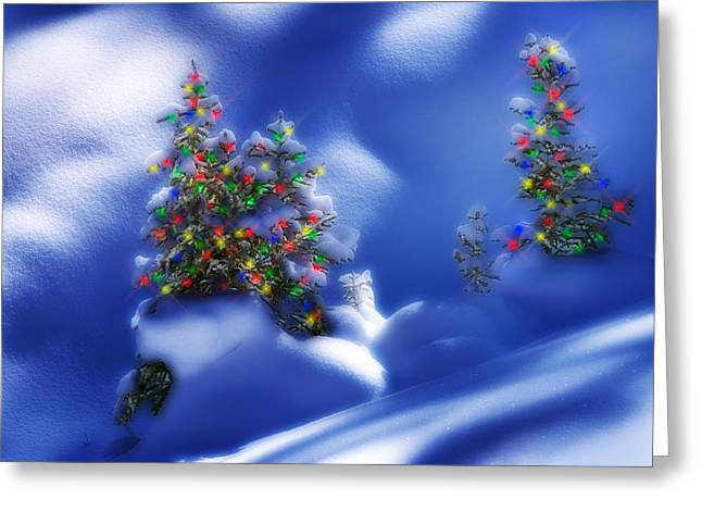 Snowy Night Night Greeting Cards - Outdoor Christmas Trees Greeting Card by Utah Images