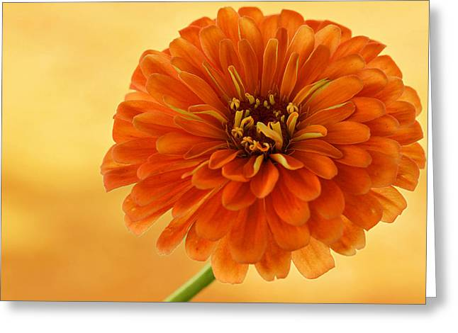 Indiana Flowers Digital Art Greeting Cards - Outrageous Orange Greeting Card by Sandy Keeton