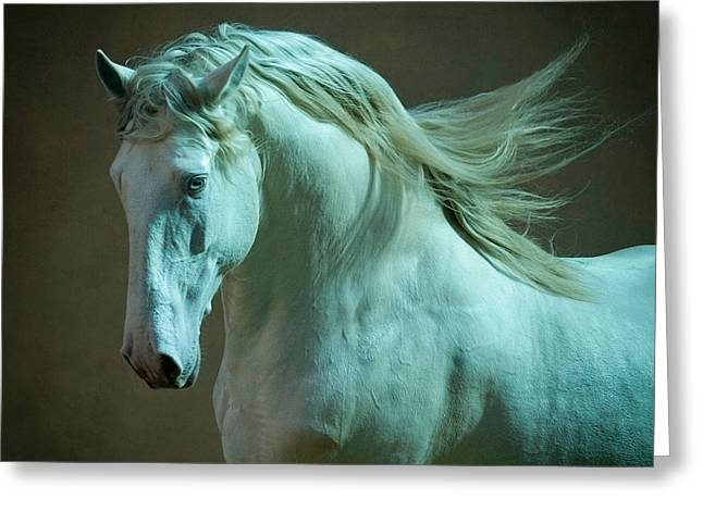 Sea Horse Greeting Cards - Outstanding Lusitano stallion portrait in soft lights Greeting Card by Olga Itina