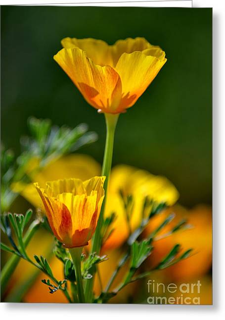 Green And Yellow Greeting Cards - Over and Above Greeting Card by Deb Halloran