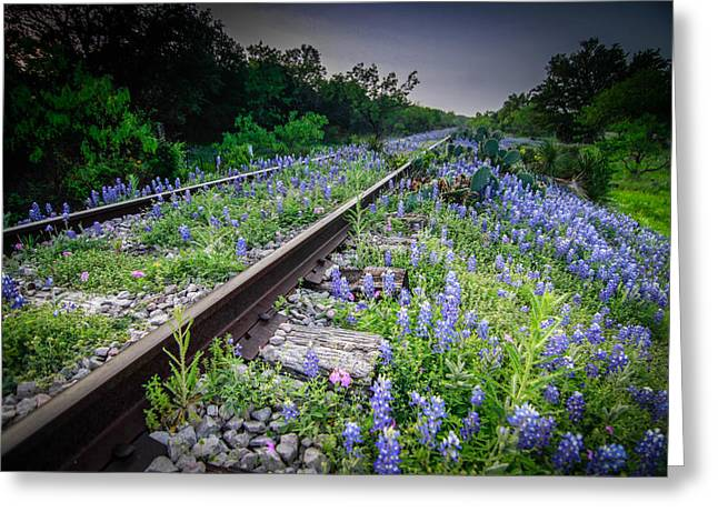 Texas Hill Country Landscape Greeting Cards - Over Grown Greeting Card by Chris Multop