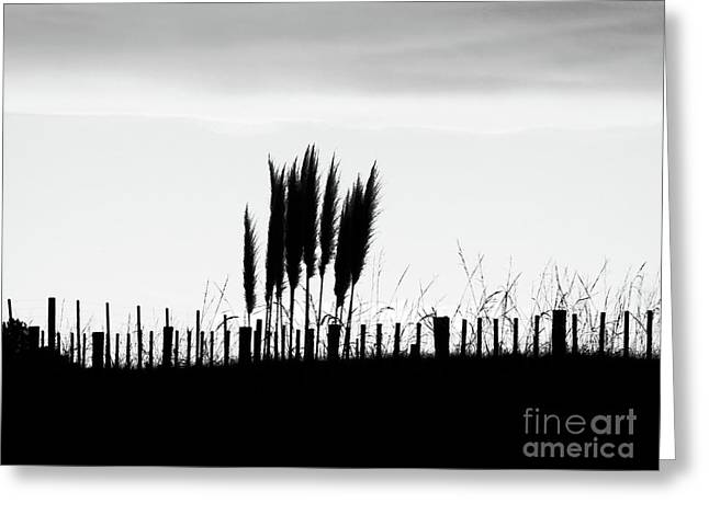 Over The Fence Greeting Card by Karen Lewis