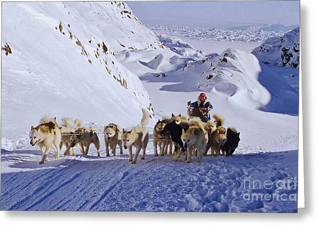 Arctic Dog Greeting Cards - Over the hills Greeting Card by Wedigo Ferchland