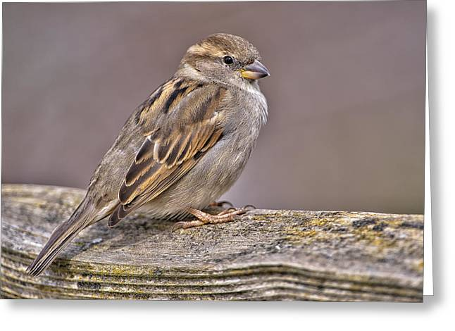 Sparrow Greeting Cards - Overlooked Beauty Greeting Card by Paul W Sharpe Aka Wizard of Wonders