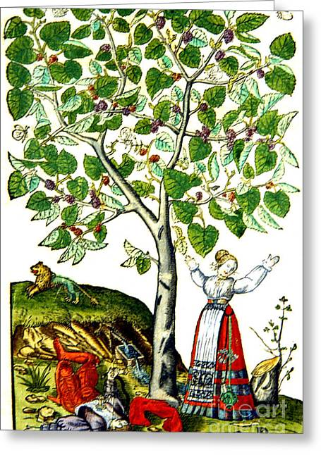 Artwork Of Butterfly Greeting Cards - Ovids Pyramus And Thisbe Myth Greeting Card by Photo Researchers