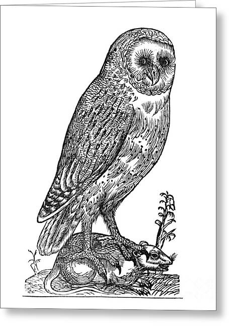 1555 Greeting Cards - Owl, 1555 Greeting Card by Middle Temple Library