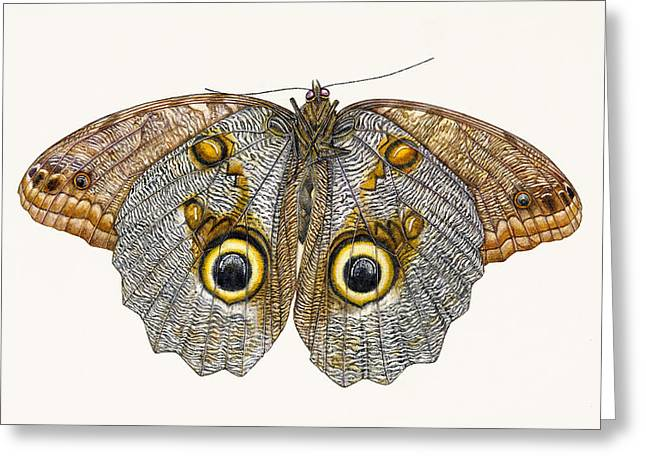 Pretty Brown Eyes Greeting Cards - Owl Butterfly Greeting Card by Rachel Pedder-Smith