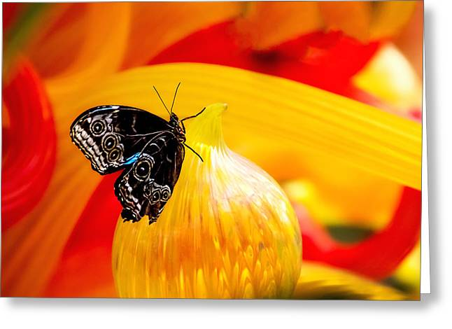 Danaus Plexippus Greeting Cards - Owl Eye Butterfly on Colorful Glass Greeting Card by Tom Mc Nemar