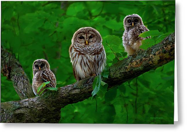 Owlets Greeting Cards - Owl Family Greeting Card by Ron Jones
