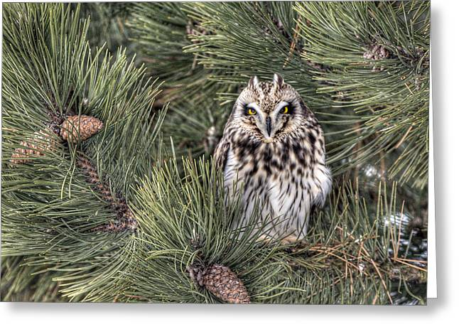 Owl In The Pine Greeting Card by CR  Courson