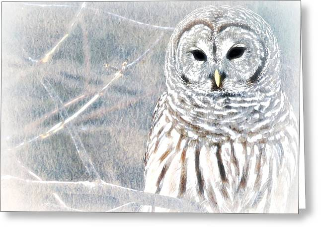 Dream Scape Greeting Cards - Owl In Winter Greeting Card by Wbk