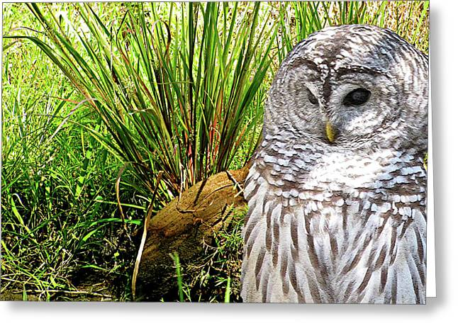 Different Owl Greeting Cards - Owl Landscape Greeting Card by Debra     Vatalaro
