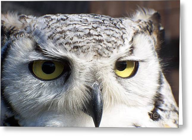 Owl Eyes Greeting Cards - Owl Reflections Greeting Card by Vera Gadman