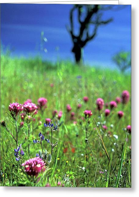 Pink Flower Prints Photographs Greeting Cards - Owls Clover and the Tree Greeting Card by Kathy Yates