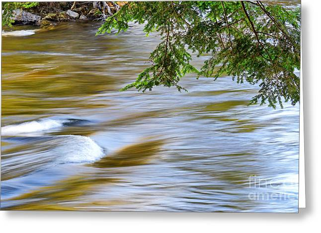 Beautiful Creek Greeting Cards - Oxtongue River Rapids Greeting Card by Charline Xia