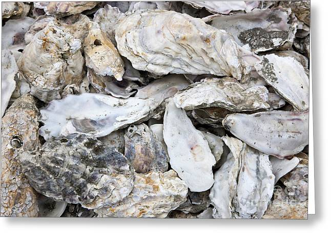 Spats Greeting Cards - Oyster Shells Greeting Card by Inga Spence