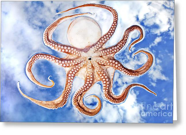 Pacific Octopus Greeting Card by Mike Raabe