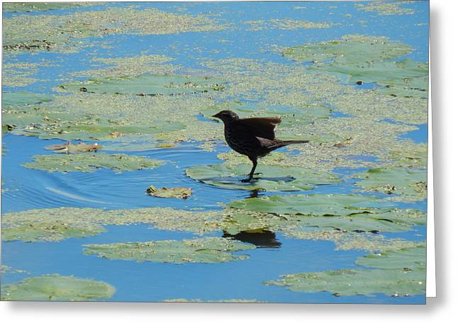 Wildlife Refuge. Greeting Cards - Pad Hopping Greeting Card by Wild Thing