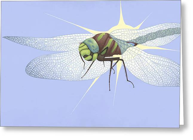 Flying Animal Greeting Cards - Paddle-tailed Darner Greeting Card by Nathan Marcy