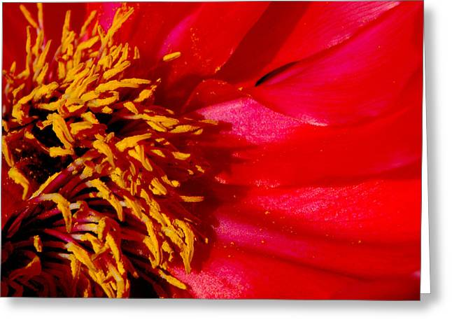 Abstract Shapes Greeting Cards - Paeonia 1 Greeting Card by Lyn  Perry