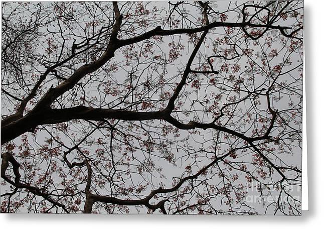Flower Blossom Greeting Cards - Paint The Sky Greeting Card by Irfan Dar