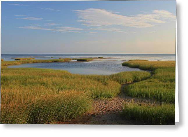 Paines Creek Marsh And Cape Cod Bay Greeting Card by John Burk