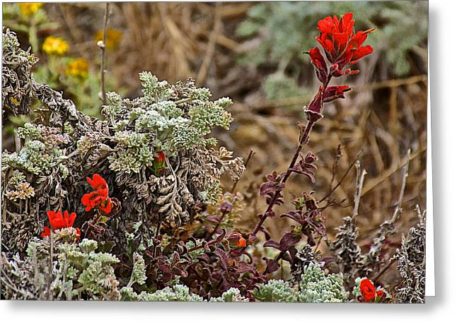 Point Lobos Reserve Greeting Cards - Paintbrush and Ocean Scrub in Point Lobos State Reserve near Monterey-California Greeting Card by Ruth Hager