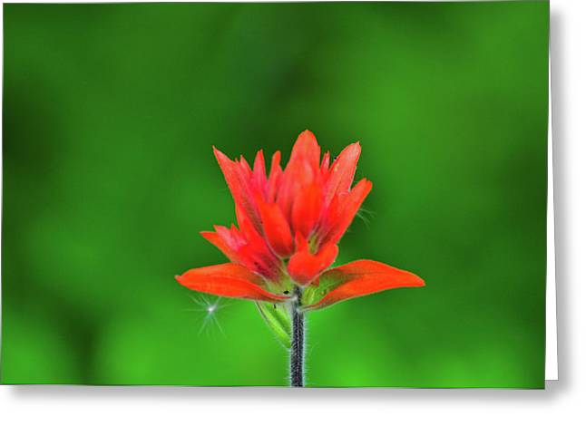 Wyoming Greeting Cards - Paintbrush Greeting Card by Greg Norrell