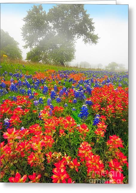 Foggy Landscape Greeting Cards - Paintbrush in the Fog Greeting Card by Inge Johnsson