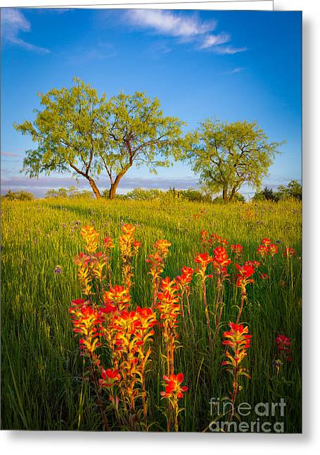 Indian Paintbrush Greeting Cards - Paintbrush on Fire Greeting Card by Inge Johnsson