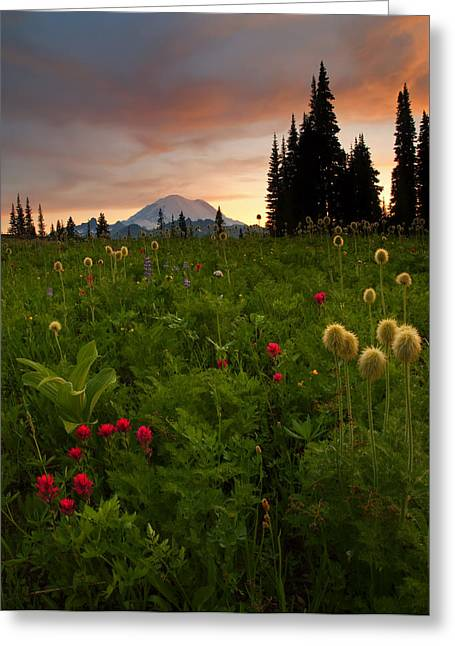 Anenome Greeting Cards - Paintbrush Sunset Greeting Card by Mike  Dawson