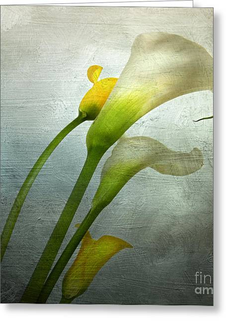 Entire Greeting Cards - Painted Arum Greeting Card by Bernard Jaubert