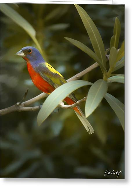 Painted Bunting Male Greeting Card by Phill Doherty