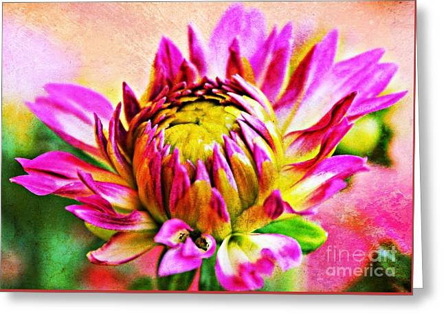 Bitsy Greeting Cards - Painted Dahlia Greeting Card by Clare Bevan