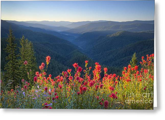 Idaho Greeting Cards - Painted Forest Greeting Card by Idaho Scenic Images Linda Lantzy