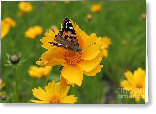 Jeannie Burleson Greeting Cards - Painted Lady Butterfly Greeting Card by Jeannie Burleson