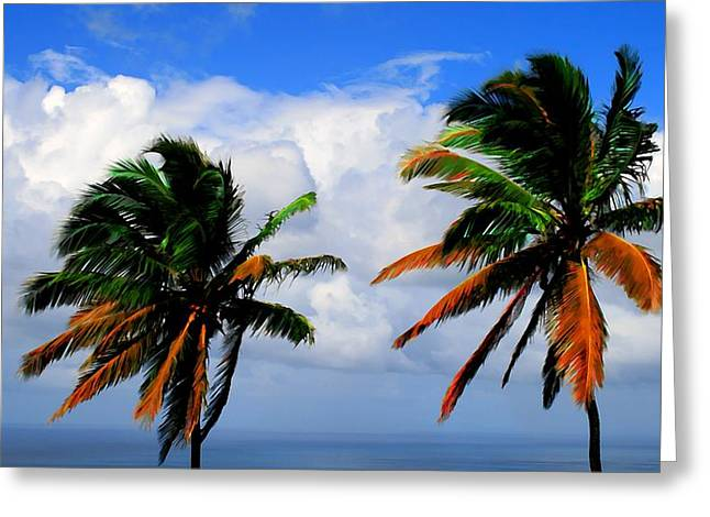 Best Ocean Photography Greeting Cards - Painted Palm trees Greeting Card by Perry Webster