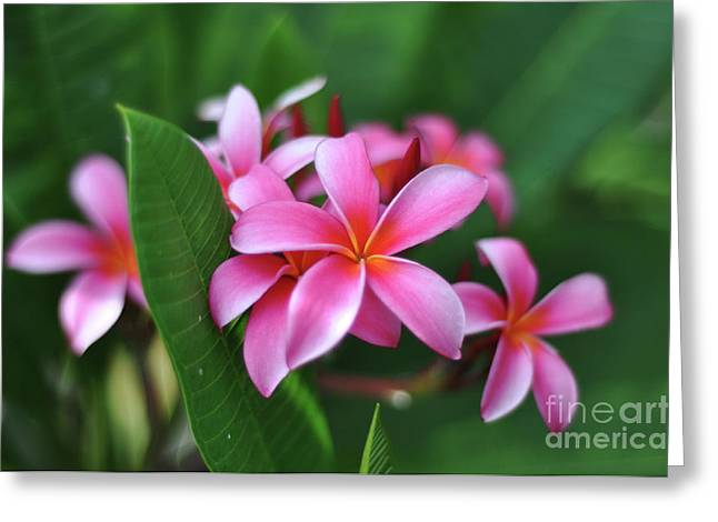 Paint Photograph Greeting Cards - Painted Plumerias Greeting Card by Kelly Wade