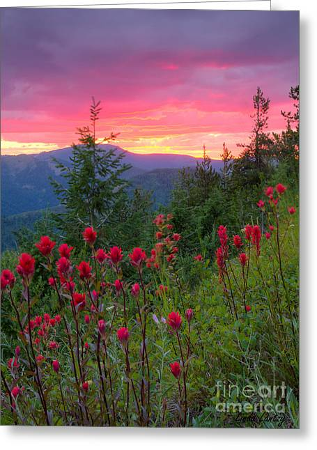 North Idaho Greeting Cards - Painted Sky Greeting Card by Idaho Scenic Images Linda Lantzy