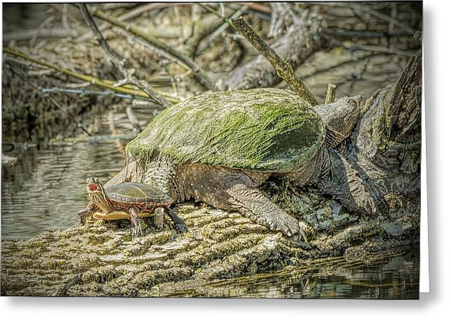 Coldblooded Greeting Cards - Painted Snapping Turtle Surprize III  Greeting Card by LeeAnn McLaneGoetz McLaneGoetzStudioLLCcom