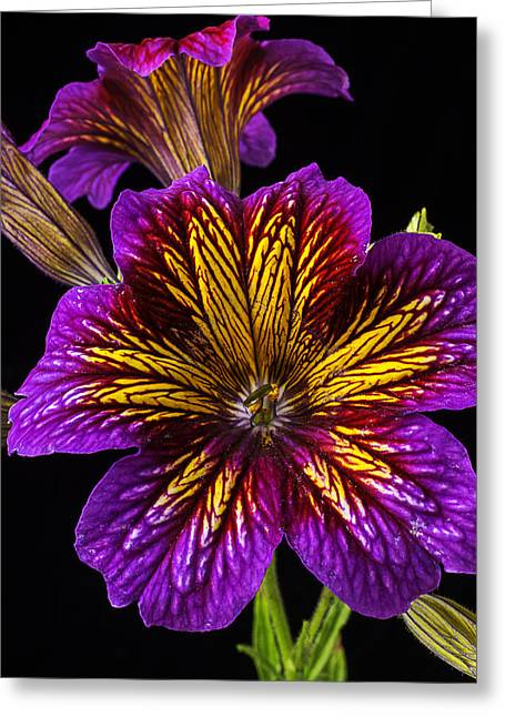 Painted Details Greeting Cards - Painted Tongue Royale Purple Bicolor Greeting Card by Garry Gay