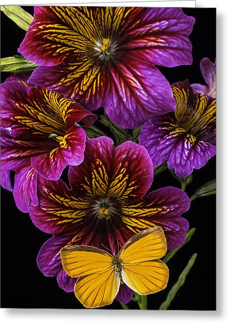 Painted Details Greeting Cards - Painted Tongue With Orange Butterfly Greeting Card by Garry Gay