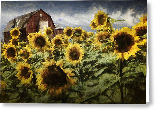 Painterly Effects On Golden Blooming Sunflowers With Red Barn Greeting Card by Randall Nyhof