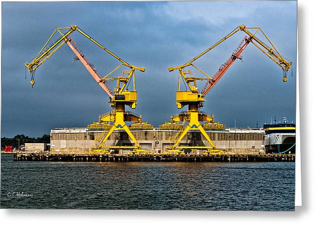 Pair Of Cranes Greeting Card by Christopher Holmes