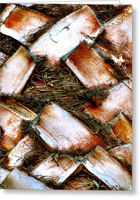 Vision Of Loveliness Greeting Cards - Palm Bark Greeting Card by Debra     Vatalaro