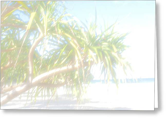 Recently Sold -  - Shower Curtain Greeting Cards - Palm Beach Greeting Card by Jim  Welch